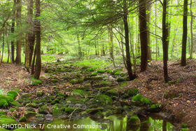 Protect Loyalsock State Forest from drilling